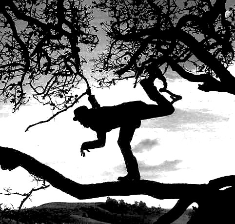 http://wearecolour.files.wordpress.com/2008/06/tom_waits_tree.jpg